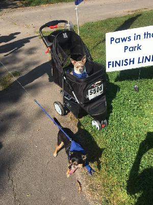 Paws in the Park 2018: Carissa D Harter - SPCA Serving Erie